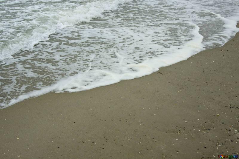 Ischia, topi e pesci morti nel porto di Forio