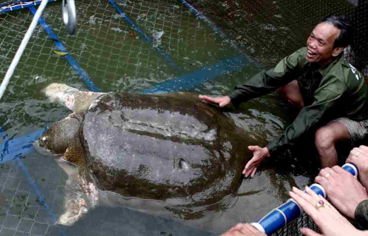Cina: muore una delle tartarughe più rare al mondo