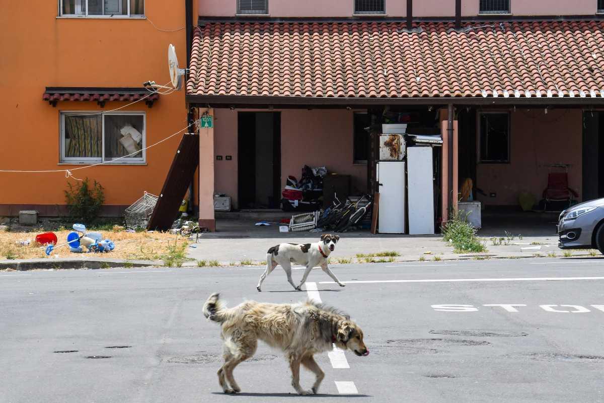 salvini mineo cara cani