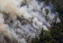 Incendio Brasile Amazzonia