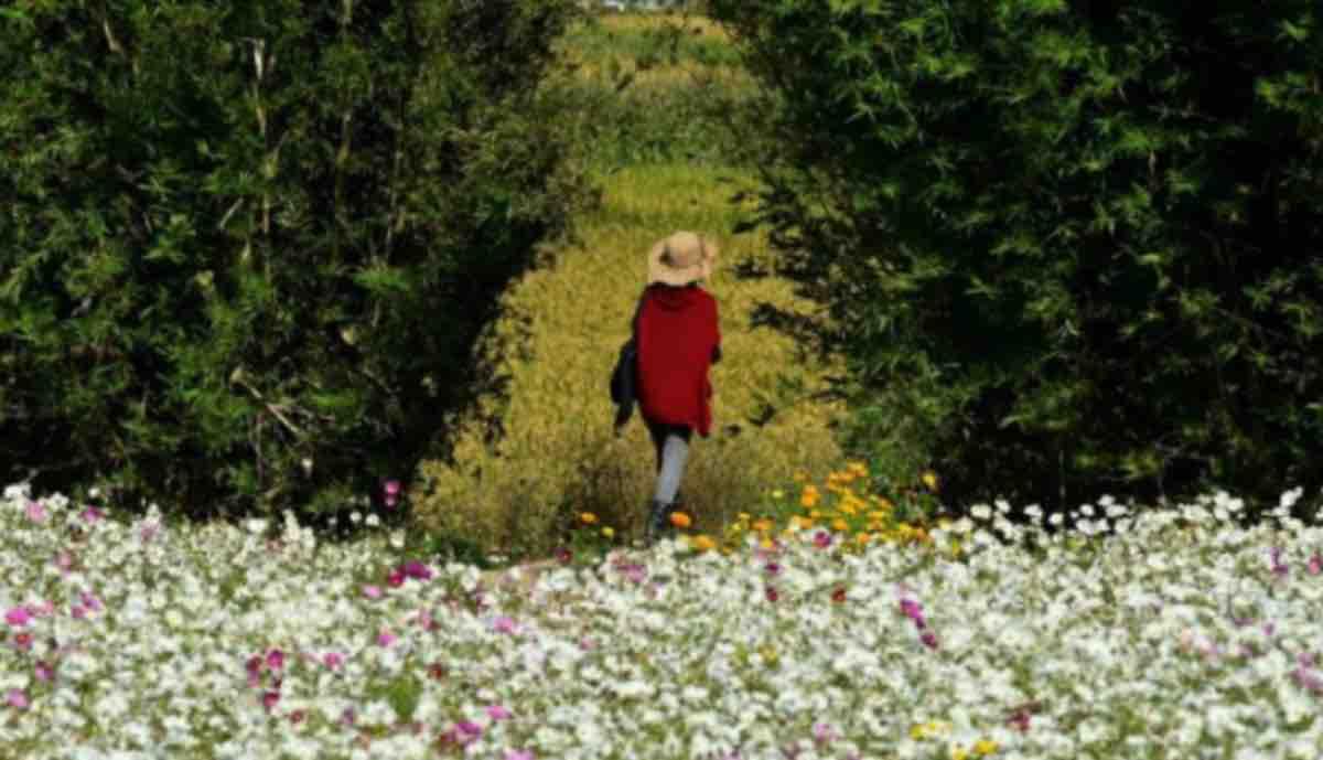 Camminare per star bene: una semplice passeggiata aiuta la salute