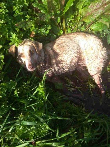 Cane sparato in Galizia (Facebook)