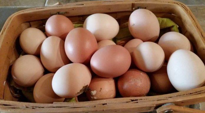 Le uova e i gusci sono davvero alleati della salute? Ecco la verità