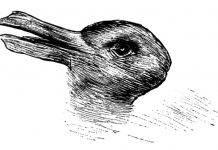 Test personalità: quale animale vedi?