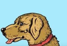 Test personalità, immagine nascosta: pensi di vedere solo il cane?