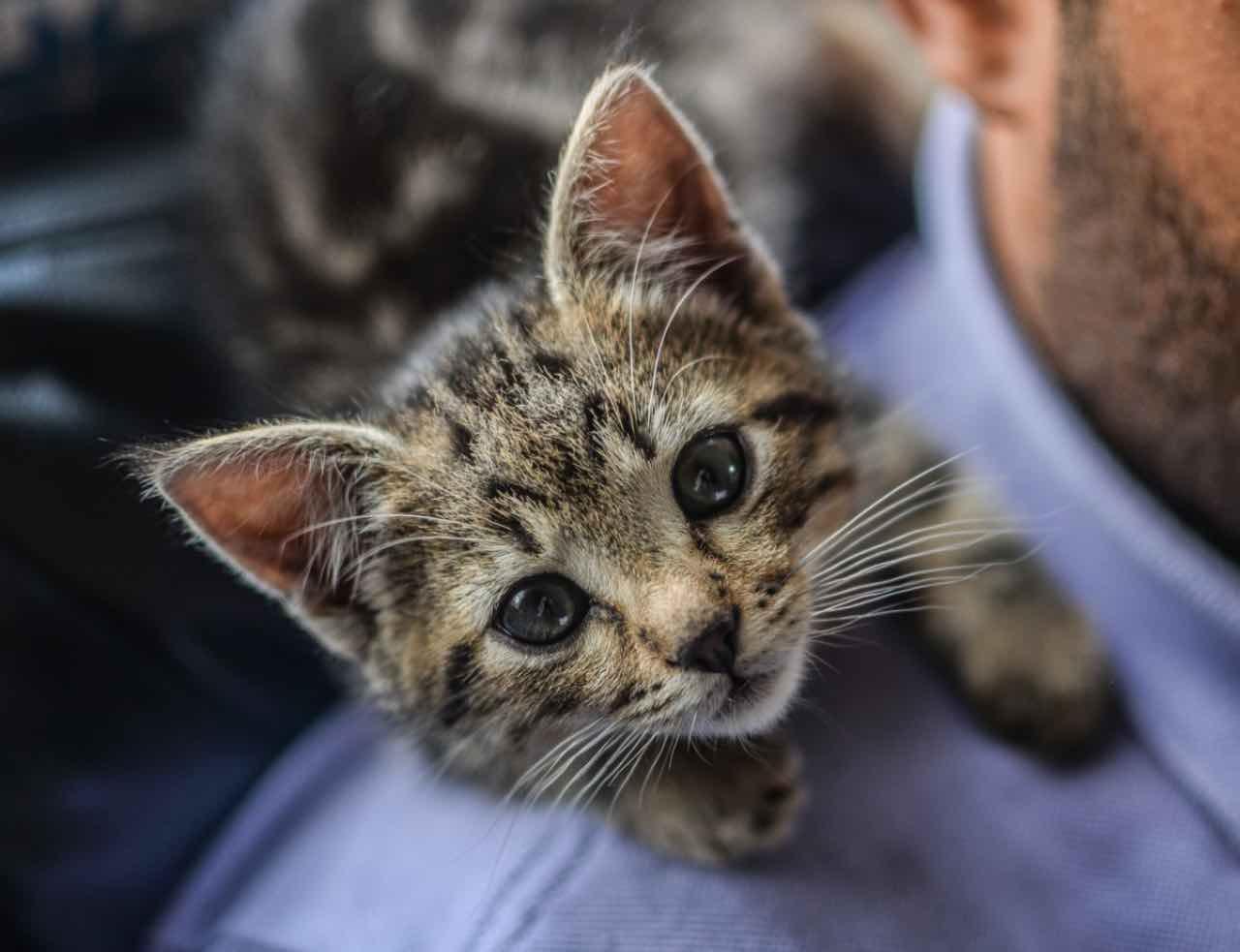 Gatti: ecco come scegliere il nome del tuo nuovo amico - Video