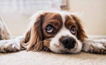 Cane e alimentazione: ecco i cibi da evitare assolutamente –