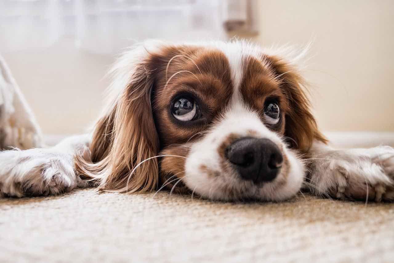Cane e alimentazione: ecco i cibi da evitare assolutamente - Video