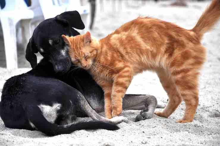 Vuoi adottare un cucciolo di cane o gatto? Alcuni consigli per non sbagliare
