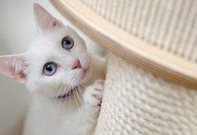 Gatti, miagolio e coda: cosa vuole dirti? Impara il linguaggio - VIDEO