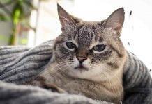 Gatti, amore e coccole: ecco le cose che più odiano - Video
