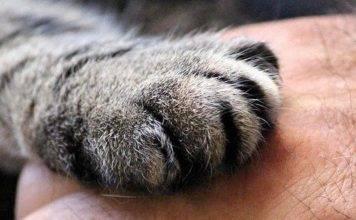 Festa del gatto: l'emozionante video del bimbo che festeggia così