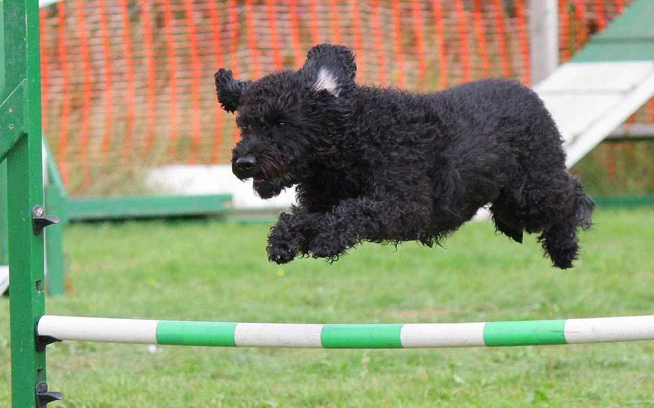 Cani: ecco le attività che svolgono meglio degli umani - Video