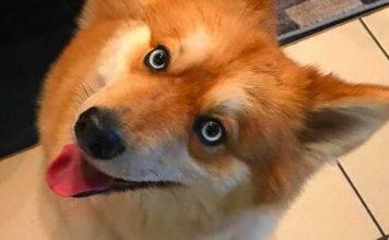 Mya, l'incantevole cagnolina con i tratti di una volpe e lo
