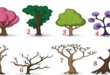 Test personalità: il primo albero che scegli ti dirà chi sei