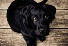 Il cane trema, cosa vuole dirci? Potrebbe essere in pericolo o felice