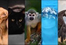 Test personalità: scegli tra gli animali nelle immagini e scopri chi sei