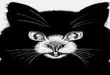 Test animali – immagine: il primo scelto dirà che tipo di persona sei