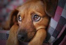 """Cane: ecco come il nostro amico a quattro zampe ci dice """"Ti voglio bene"""""""