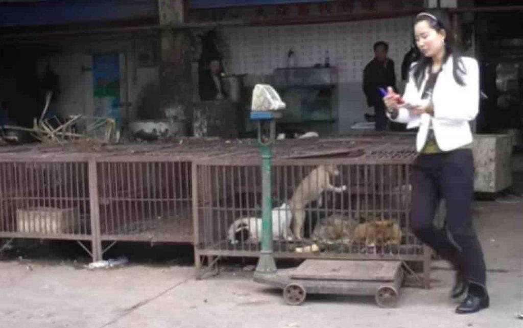 mercato Whuan Cina