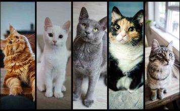 Test personalità: scegli un gatto e scopri come ti vedono gl
