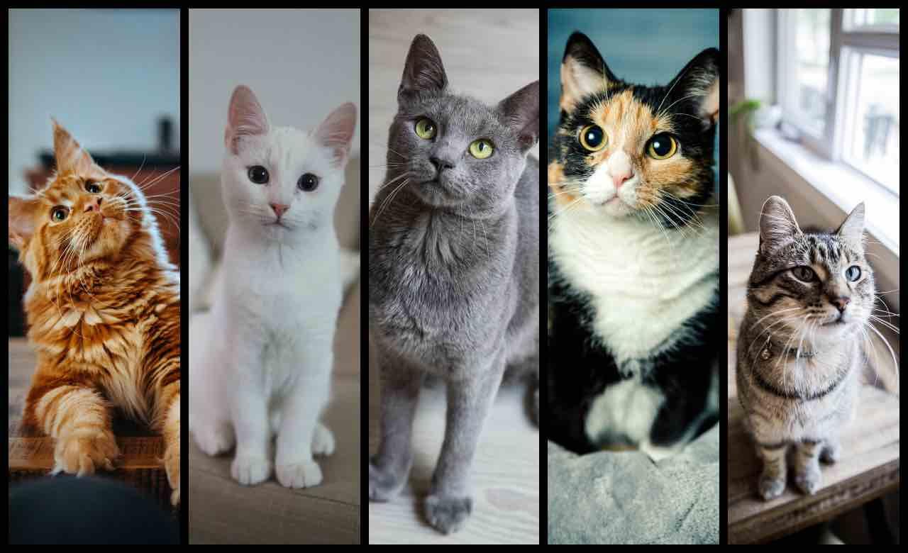 Test personalità: scegli un gatto e scopri come ti vedono gli altri