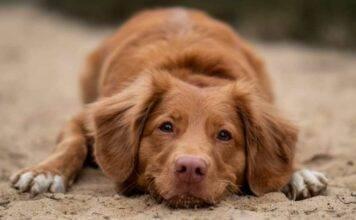 Abbandona cane e cuccioli nonostante le suppliche: il video