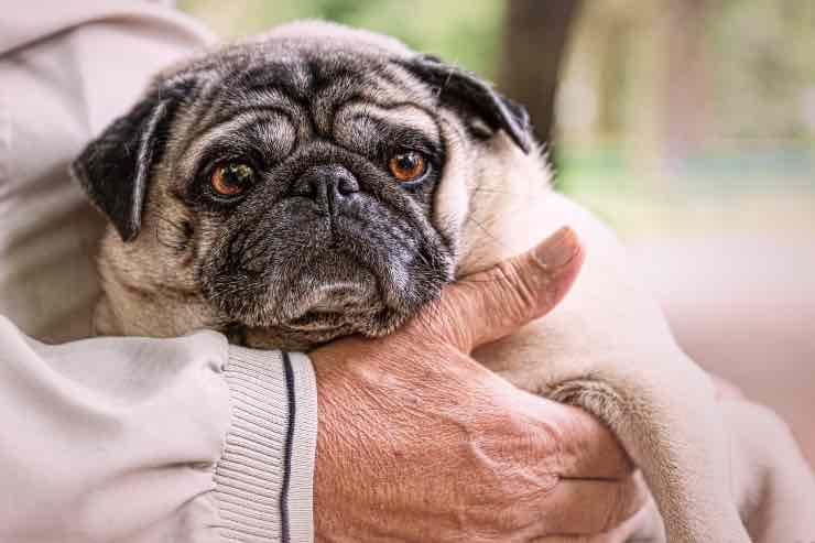 Come accarezzare il nostro cane? La risposta arriva dalla scienza