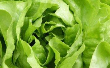 Dieta della lattuga, un vero portento se hai questo problema