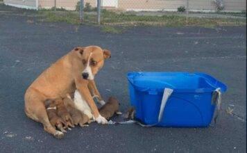 La straziante storia di Dory: cagnolina abbandonata con i su