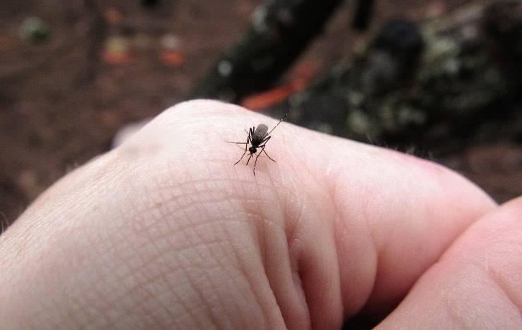 Punture di insetto, come evitarle e rimediare? Ecco alcuni consigli