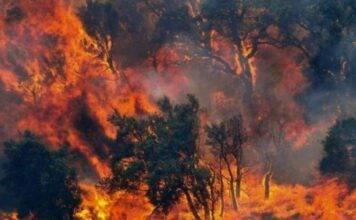 Incendi in Sardegna: volontario e poliziotto li accendevano invece di spegnerli