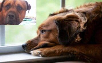 Il cane capisce di essere stato abbandonato e piange, VIDEO