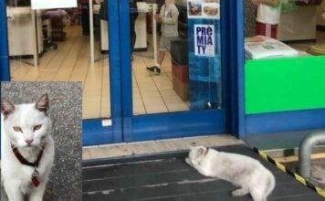 Gattina aspetta tutti i giorni la padrona davanti al supermercato: ma lei è morta