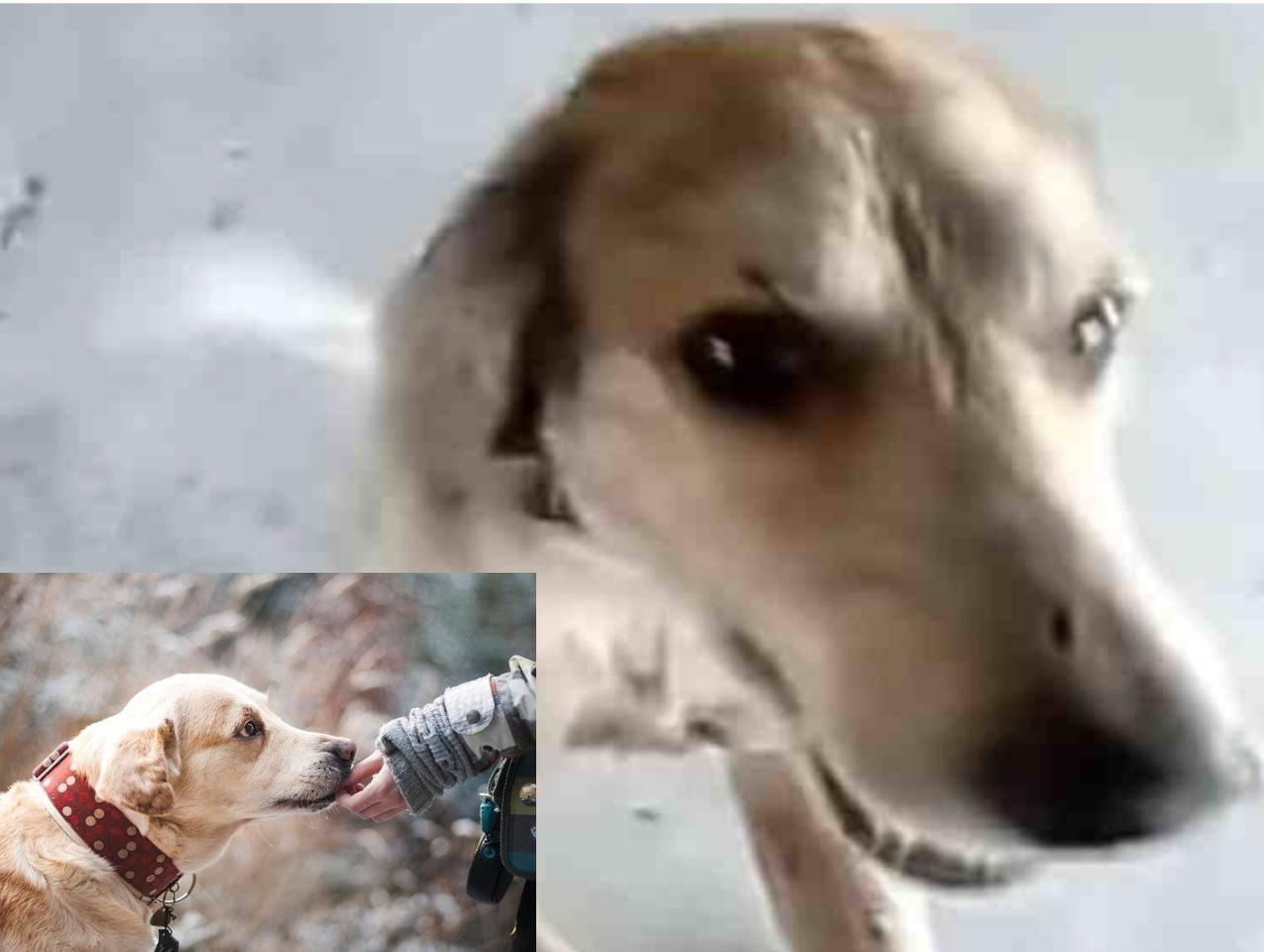 coco cane