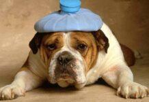Farmaci animali