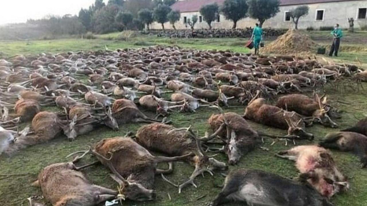 Massacrati 540 tra cervi e cinghiali: choc in Portogallo