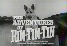 Rin Tin Tin (Google Images)