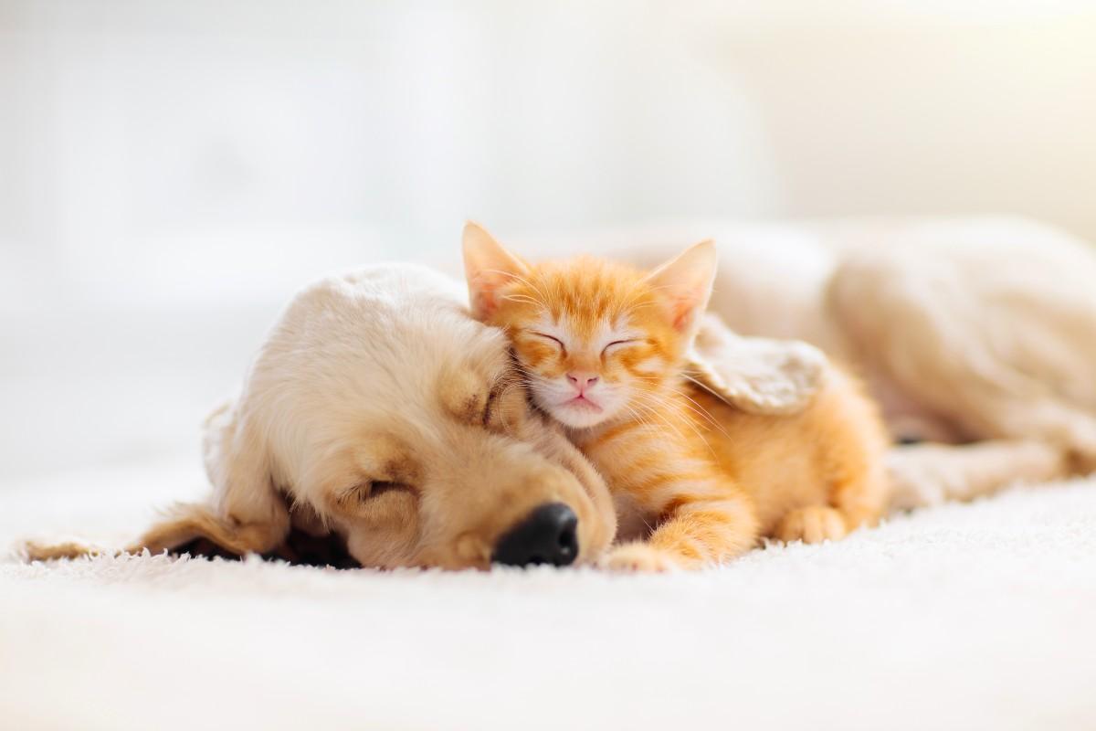 Animali: cani e gatti (AdobeStock)