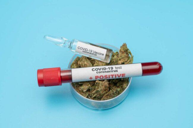 Vaccino - cannabis (AdobeStock)
